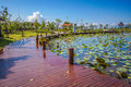 Recreation park wuth wooden wakway and lotus swamp Royalty Free Stock Images