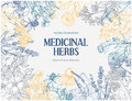 Rectangular card template with vintage sketches of medicinal herbs and flowers