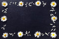 Rectangular frame of white daisies on a black background. Floral pattern with copy space lay flat. Flowers top view. Royalty Free Stock Photo