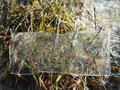 Ice piece on grass in winter, Lithuania Royalty Free Stock Photo