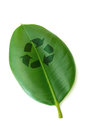 Recycle recycling symbol printed on a leaf over a white background Stock Photography