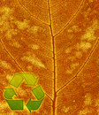Recycle symbol on the leaf background Stock Image