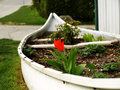 Recycled, white canoe reused as a flower garden Royalty Free Stock Photo