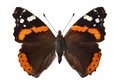 The Red Admiral Stock Image