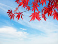 Red  against blue sky Royalty Free Stock Photo