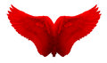 Red Angel Wing isolated Royalty Free Stock Photo