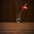 Red anthurium flamingo flower boy flower in glass vase on woo wooden background closeup Stock Image