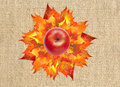Red apple on colorful autumn maple leaves bouquet on linen Royalty Free Stock Photo