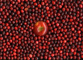 Red apple and cranberries Royalty Free Stock Photo