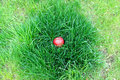 Red apple lying in the grass Stock Photo