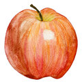 Red apple watercolor drawing of a isolated Stock Image