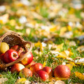Red apples in basket Royalty Free Stock Photo