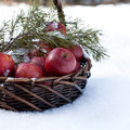 Red apples in basket in snow outside with decorated fir branch covered nature winter forest Stock Image