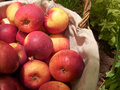 Red apples basket vegetable garden Stock Photos