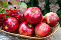 Red Apples in the basket Royalty Free Stock Photo