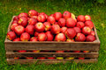 Red apples in a box Royalty Free Stock Photos
