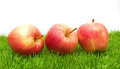 Red Apples on Grass Royalty Free Stock Image
