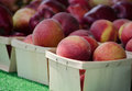 Red apples for sale containers of crisp are at a local farm stand Royalty Free Stock Photo