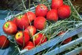 Red apples in a wooden box on the ground. Harvesting.