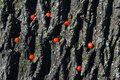 Red autumn berries treen trunk background nature nobody Royalty Free Stock Photo