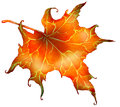 Red autumn leaf fallen from maple tree and dry digital art Stock Image
