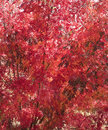 Red Autumn Leaves Colourful Ba...
