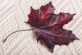 Red autumn maple leaf on a piece of woven material Royalty Free Stock Photo