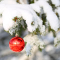 Red ball on christmas tree branch covered with snow outside winter sunny day Stock Photography