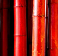 Red bamboo Royalty Free Stock Images
