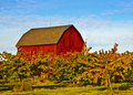 Red Barn, Apple Trees, Michigan