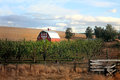 Red Barn and Orchard Royalty Free Stock Photo