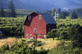 Red barn & orchards. Royalty Free Stock Photography