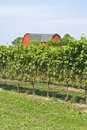 Red Barn in a Vineyard Royalty Free Stock Photography