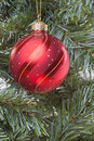 Red Bauble on Tree Royalty Free Stock Photos