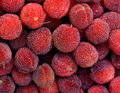 Red bayberry raw and fresh shown as raw fresh and healthy fruit or agriculture concept Royalty Free Stock Photo