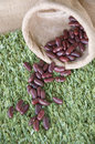 Red beans on grass green Royalty Free Stock Photography