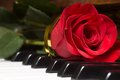 Red beautiful rose on piano keyboard. Royalty Free Stock Photo
