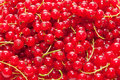 Red berries fresh currant background Royalty Free Stock Photo