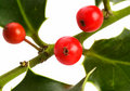 Red berries and holly leaves Royalty Free Stock Photography