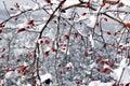 Bobule a sneh