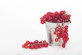 Red berries in tin bucket fresh ripe currant on white background Royalty Free Stock Photos