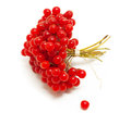 Red berries viburnum isolate white Royalty Free Stock Images