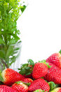 Red big juicy ripe strawberries and flower Royalty Free Stock Photos