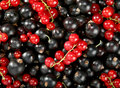 Red and black berry currant Royalty Free Stock Images