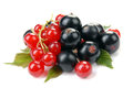 Red and black currant Royalty Free Stock Photo