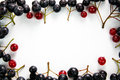 Red and black currant berry frame Royalty Free Stock Photo
