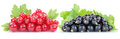 Red and black currant currants berries fresh fruits fruit isolat Royalty Free Stock Photo