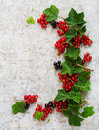 Red and black currant with leaves Royalty Free Stock Photo