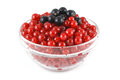 Red and black currants in a glass bowl Stock Photos