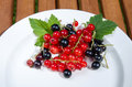 Red and black currants on a plate Royalty Free Stock Images
